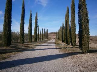 Foto - Rustico / Casale via di San Martino, Monteroni d'Arbia