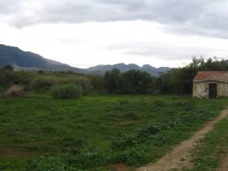 Foto - Terreno agricolo in Vendita a Palermo