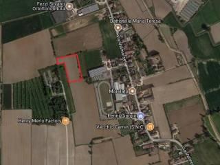 Foto - Terreno agricolo in Vendita a Salizzole