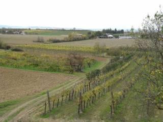 Foto - Terreno agricolo in Vendita a Bertinoro