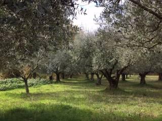 Foto - Terreno agricolo in Vendita a Monte San Giovanni Campano