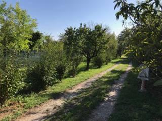 Foto - Terreno agricolo in Vendita a Cavaion Veronese