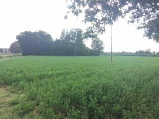 Foto - Terreno agricolo in Vendita a Galliera