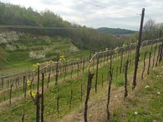 Foto - Terreno agricolo in Vendita a Corno di Rosazzo