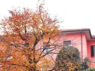 Foto - Palazzo / Stabile via Giotto 1, Bettole, Varese