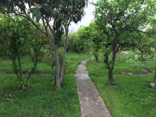 Foto - Terreno agricolo in Vendita a Santa Flavia