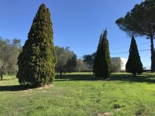 Foto - Terreno agricolo in Vendita a Castel Sant'Elia