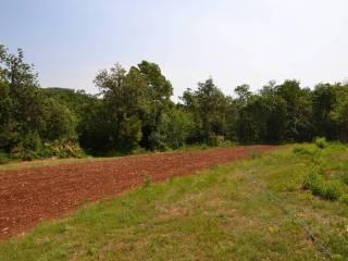 Foto - Terreno edificabile residenziale a Lonigo