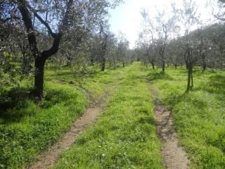 Foto - Terreno agricolo in Vendita a Vinci