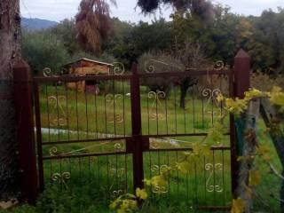 Foto - Terreno agricolo in Vendita a Genzano di Roma