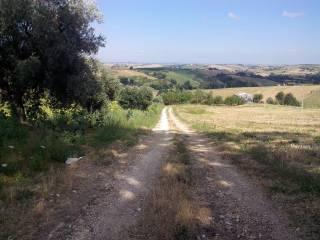 Foto - Terreno agricolo in Vendita a Staffolo