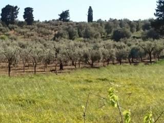 Foto - Terreno agricolo in Vendita a Otranto