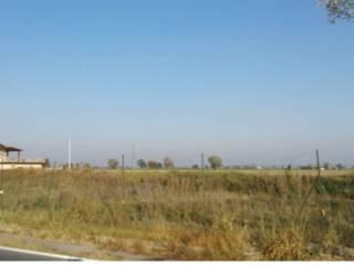Foto - Terreno agricolo in Vendita a San Pietro in Cerro
