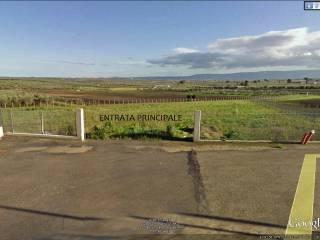 Foto - Terreno agricolo in Vendita a Torremaggiore