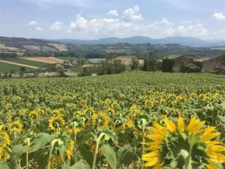 Foto - Terreno agricolo in Vendita a Orte