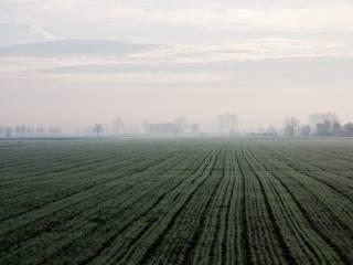 Foto - Terreno agricolo in Vendita a Taglio di Po