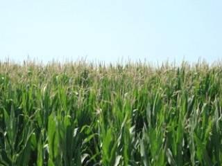 Foto - Terreno agricolo in Vendita a Conselve