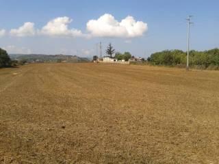 Foto - Terreno agricolo in Vendita a Pizzo