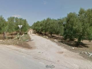Foto - Terreno agricolo in Vendita a Bitetto
