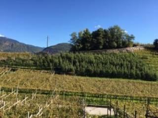 Foto - Terreno agricolo in Vendita a Cembra Lisignago