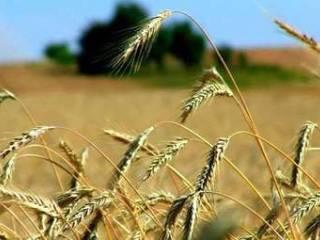 Foto - Terreno agricolo in Vendita a Pesaro