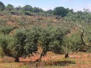 Foto - Terreno agricolo in Vendita a Martina Franca