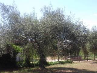 Foto - Terreno agricolo in Vendita a Gallicano nel Lazio