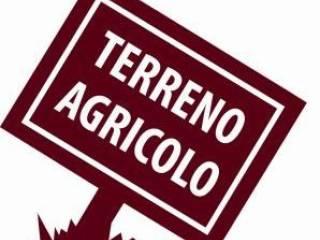 Foto - Terreno agricolo in Vendita a Bra