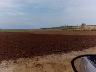 Foto - Terreno agricolo in Vendita a Seminara