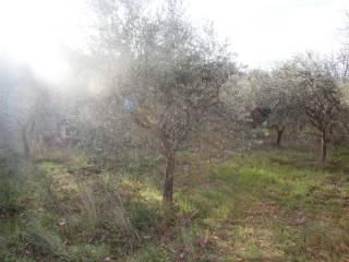 Foto - Terreno agricolo in Vendita a Spoleto