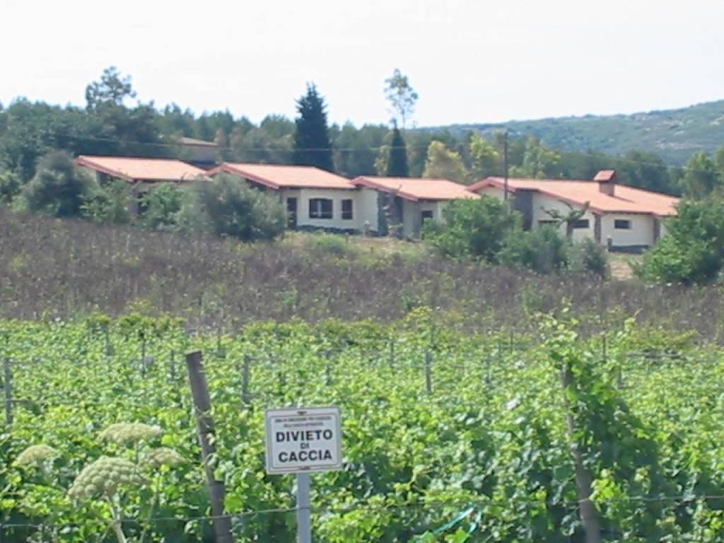 foto  Azienda agricola in Vendita a Tratalias