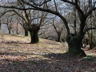 Foto - Terreno agricolo in Vendita a Cantagallo