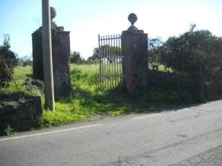 Foto - Terreno agricolo in Vendita a Piedimonte Etneo