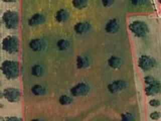 Foto - Terreno agricolo in Affitto a Siderno
