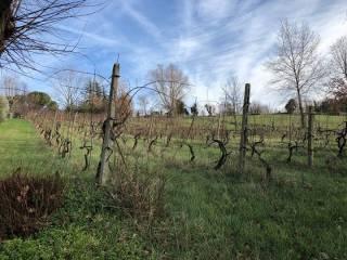Foto - Terreno agricolo in Vendita a Coriano