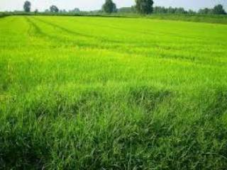 Foto - Terreno agricolo in Vendita a Cornate d'Adda