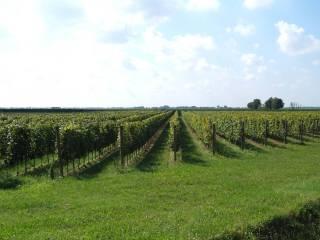 Foto - Terreno agricolo in Vendita a Monselice