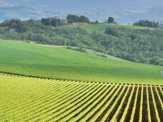 Foto - Terreno agricolo in Vendita a Desenzano del Garda