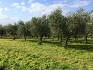 Foto - Terreno agricolo in Affitto a Marino
