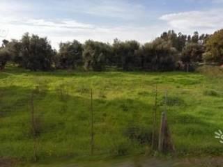 Foto - Terreno edificabile residenziale a San Vero Milis