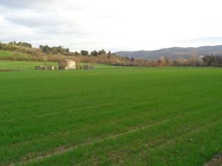 Foto - Terreno agricolo in Vendita a Perugia