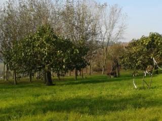 Foto - Rustico / Casale, da ristrutturare, 130 mq, Gaggina, Montaldo Bormida