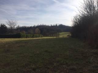 Foto - Terreno agricolo in Vendita a Arzignano
