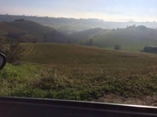 Foto - Terreno agricolo in Vendita a Mosciano Sant'Angelo