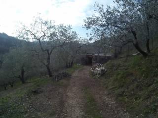Foto - Terreno agricolo in Vendita a Poggio San Lorenzo