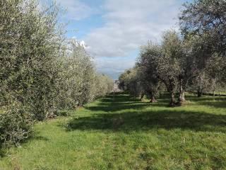 Foto - Terreno agricolo in Vendita a San Cesareo