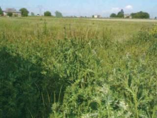 Foto - Terreno agricolo in asta a Bondeno
