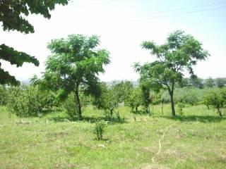 Foto - Terreno agricolo in Vendita a Montecorvino Rovella