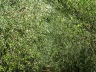 Foto - Terreno agricolo in Vendita a Osimo