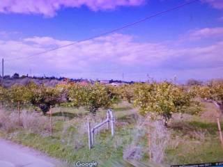 Foto - Terreno agricolo in Vendita a Lascari